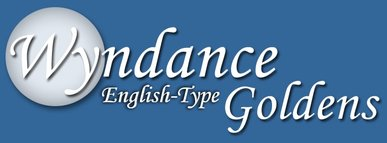 Wyndance English Goldens